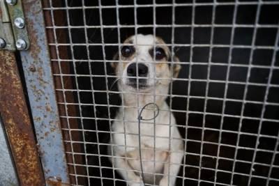 Приют с 240 животными оказался под угрозой закрытия в Чите