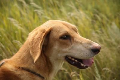 Ученые обнаружили у собак человеческое психическое расстройство