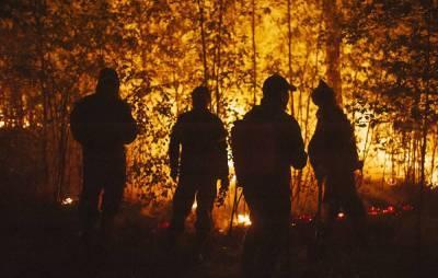 В регионах РФ за сутки потушили лесные пожары на 1 081 га