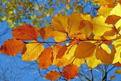 В Томске 20 октября вновь будет без осадков и до +15 градусов тепла