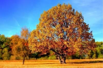 Сильные порывы ветра и до +15 градусов ожидают синоптики в Томске 21 октября
