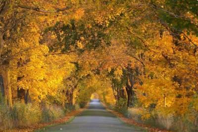 В Курской области 21 октября будет преимущественно без осадков и до +18 градусов