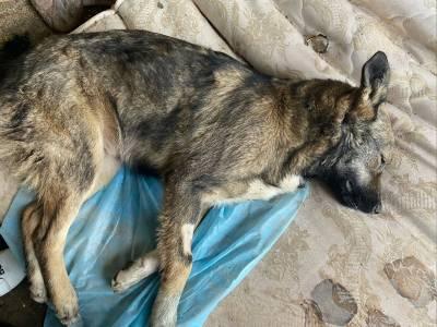 В Ухте происходят массовые убийства бездомных собак