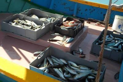 Чем могут быть опасны рыбные консервы