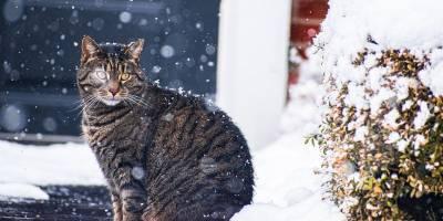 Синоптики рассказали, когда в Украине наступит потепление - прогноз на 24, 25 и 26 февраля - ТЕЛЕГРАФ