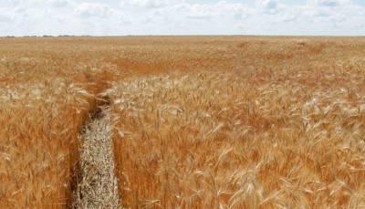 У НАПК назвали риски от бесплатной приватизации земель