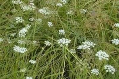 Житель Читинского района заплатит 170 тыс. руб. за добычу редкого растения