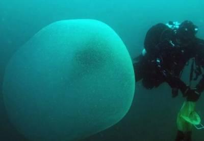 Ученые раскрыли тайну загадочных «шаров» у берегов Норвегии