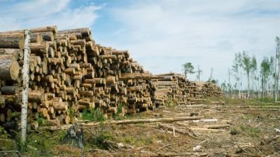 В Томской области за неделю выявили десять фактов незаконной рубки леса
