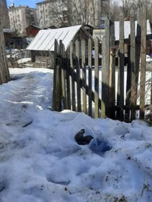 Целый пакет мертвых щенков нашли вологжане на улице