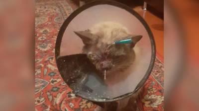 В воронежском селе неизвестный выстрелил в глаз чужому домашнему коту