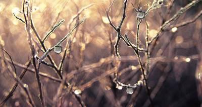 Жителей Латвии предупреждают о ночных заморозках