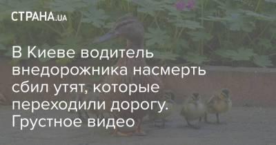 В Киеве водитель внедорожника насмерть сбил утят, которые переходили дорогу. Грустное видео
