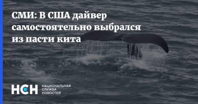 СМИ: В США дайвер самостоятельно выбрался из пасти кита
