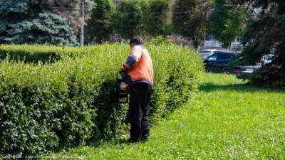 В Рязани продолжают стричь кустарники и выкашивать газоны