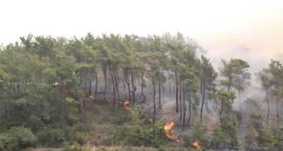 В двенадцати провинциях Турции запрещено посещать лесные массивы