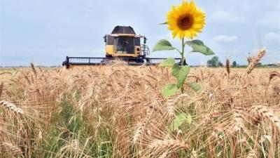 Стало известно, сколько стоит гектар земли в Украине спустя 30 дней после открытия рынка