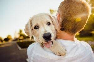 Собаки способны определять ложь – результаты исследования