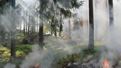 В России потушено более полусотни лесных пожаров