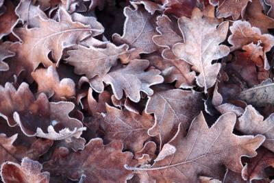 Заморозки до -2 градусов прогнозируют в Тверской области