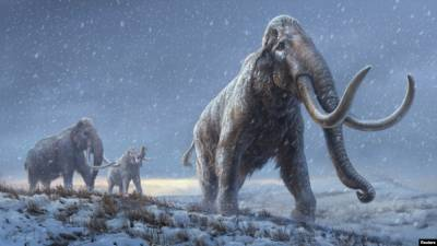 Американцы планируют заселить тундру мамонтами